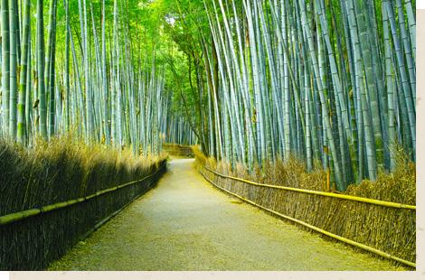 嵐山・嵯峨野/Arashiyama・Sagano